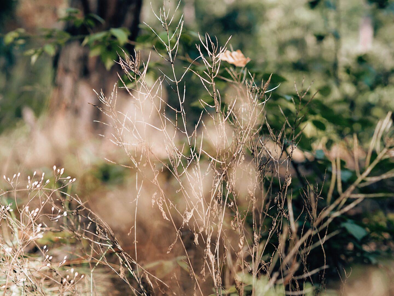 Příroda, podzim